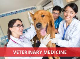 study veterinary medicine in europe